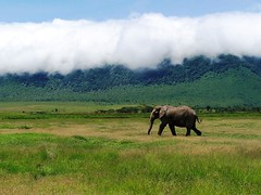Elephant and Cloud | by geoftheref