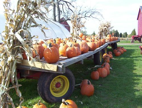 White Pumpkin Decorations Wedding