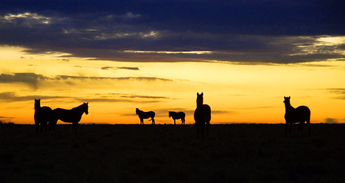 Horses at Sunrise | by Ree Drummond / The Pioneer Woman