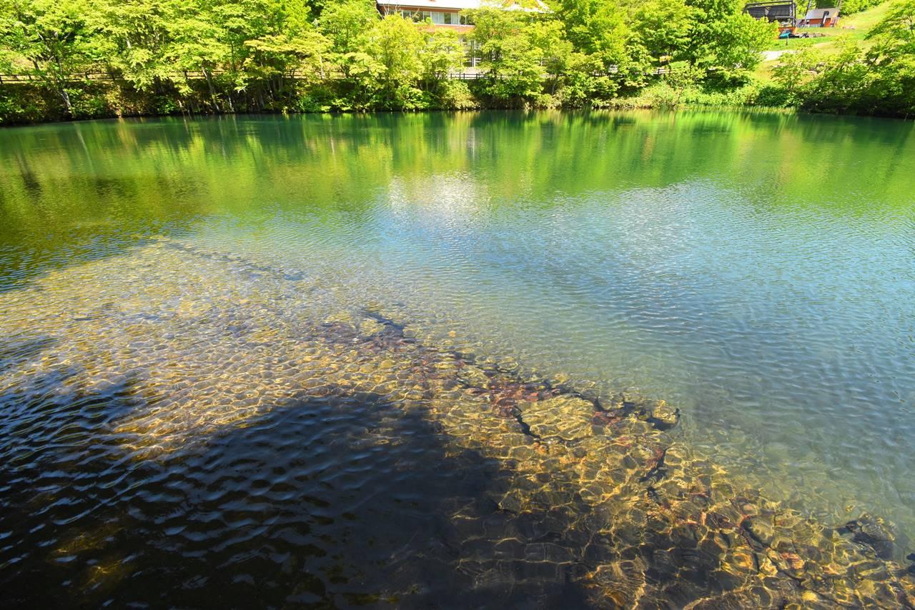 美しいドッコ沼の水