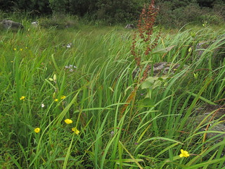 swamp L Derg shore | by Irish Ramsar Wetlands