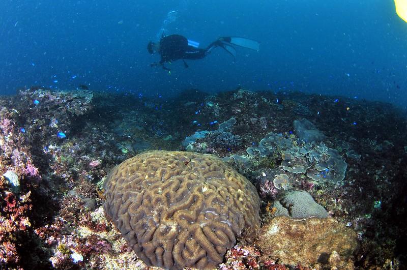 活塞教練水下攝影1