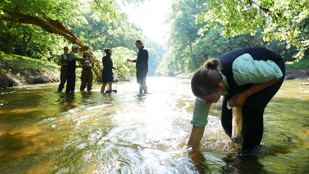 Photo of scientists placing mussels into the Patapsco River
