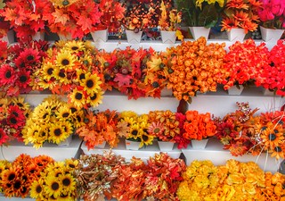 Brockville Ontario - Canada - Store front Autumn Flower Cluster - Colonial Flowers & Gift Shoppe | by Onasill ~ Bill Badzo