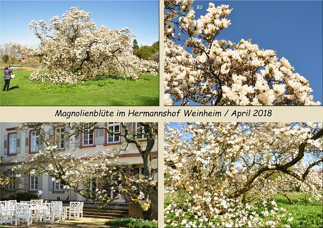 April 2018: Schau- und Sichtungsgarten Hermannshof in Weinheim an der badischen Bergstraße ... Foto: Brigitte Stolle