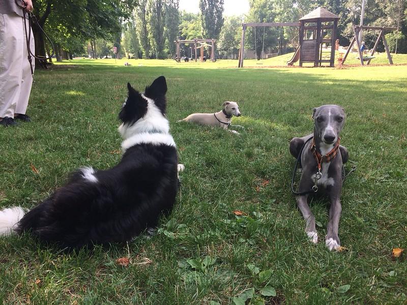 Lenny, Skye und Taavi