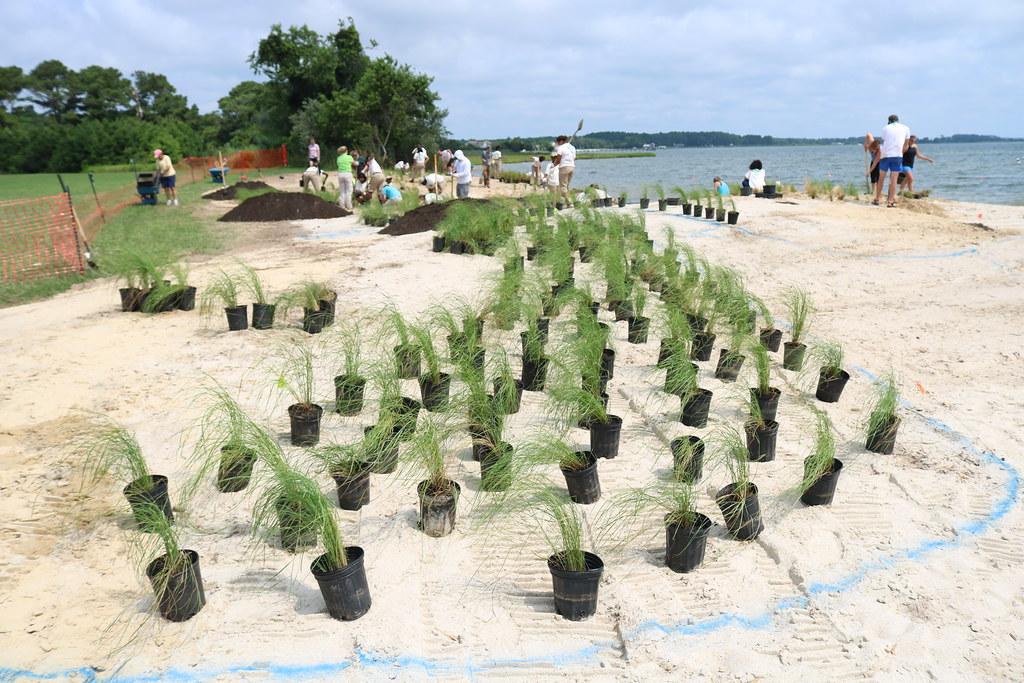 Photo of coastal resiliency project by Carlos Bautista of Underwood & Associates