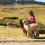 A woman with alpacas near Sacsayhuaman