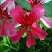 Nice flower...