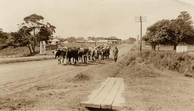 Princes Highway Ulladulla, 1920s