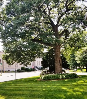 Old Oak Tree | by Manchester Library