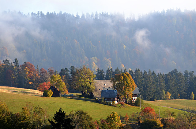 House in meadow, Black Forest, Germany