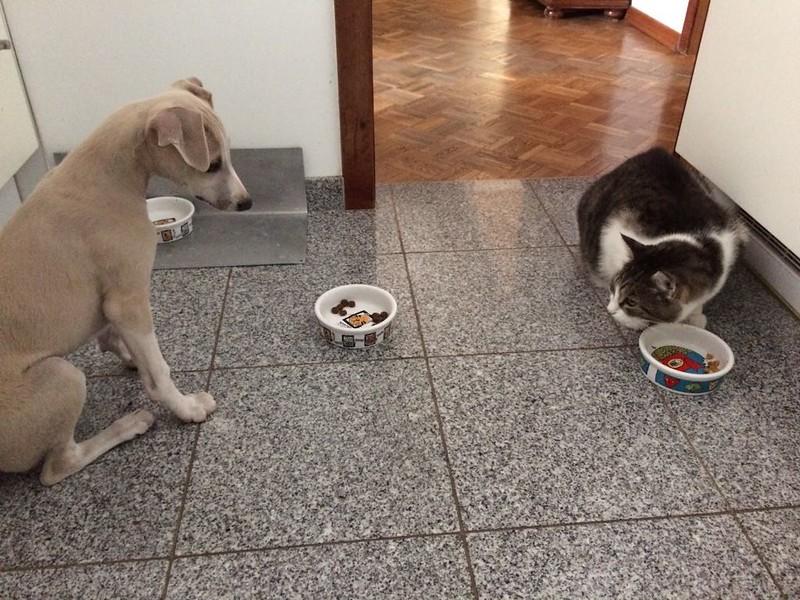 Bin ich nicht lieb?, ich lasse diesem Katzenvieh was zu fressen übrig, aber die, die weicht ja keinen cm von ihrer Schüssel weg!