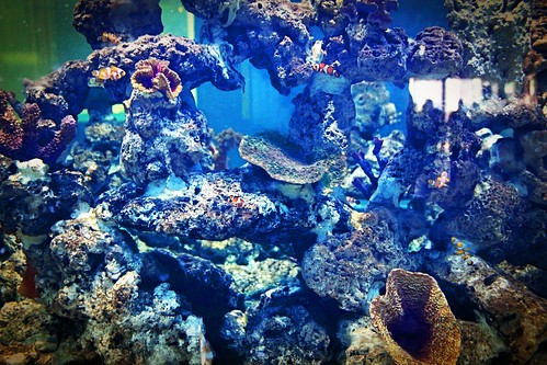 Fish Aquarium in Srisaket , Thailand | by www.icon0.com