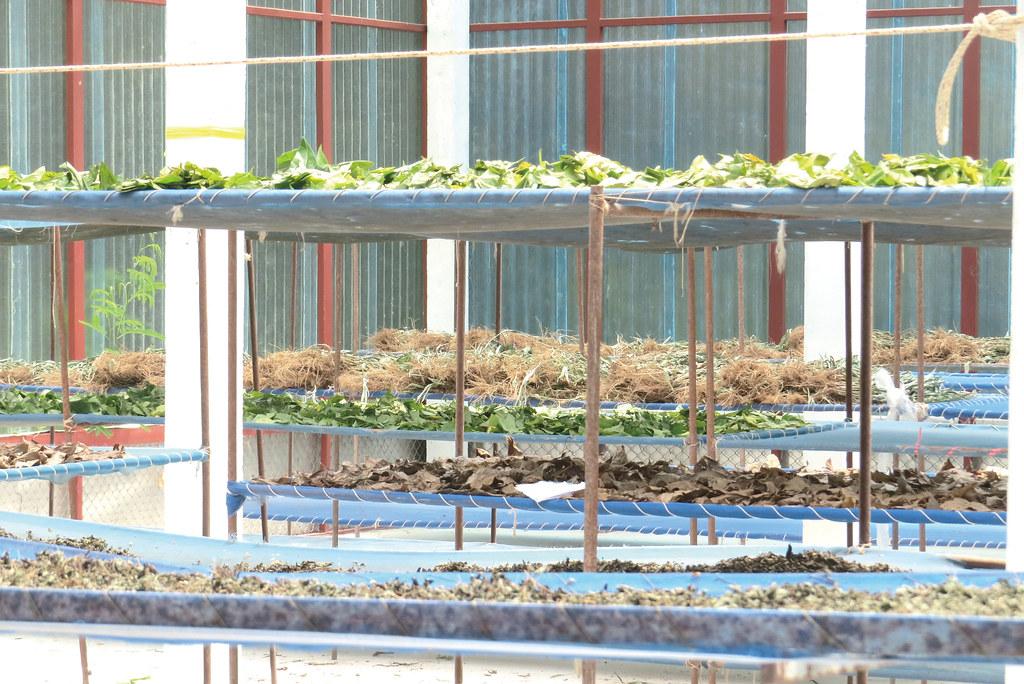 板東邦的社區有機藥草事業