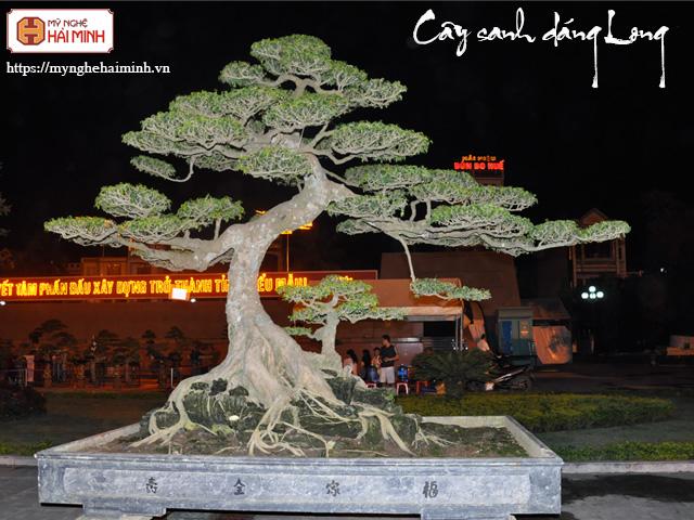 Cay sanh dang long mynghehaiminh CAY0001o