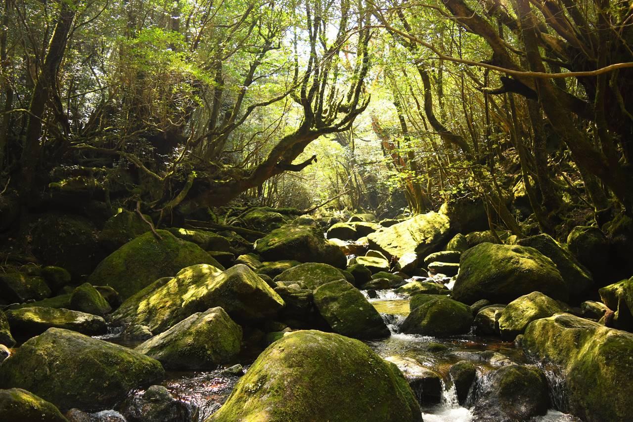 白谷雲水峡 苔むす森と清流