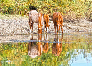 A Family Reflection | by VGPhotoz