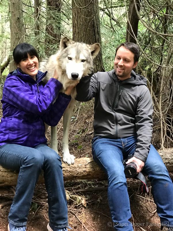 Predators of the Heart - Wolf