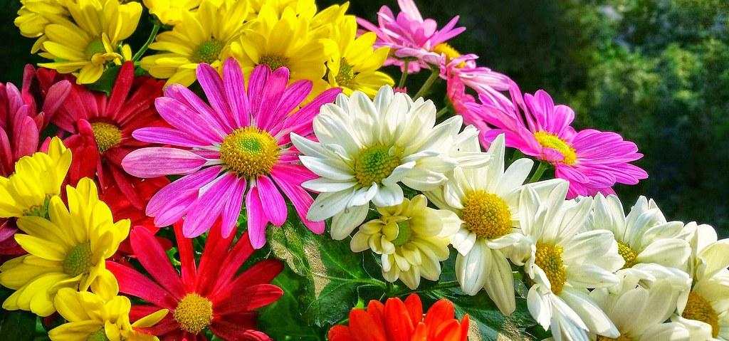 Balkon Blumen Eagle1effi Flickr