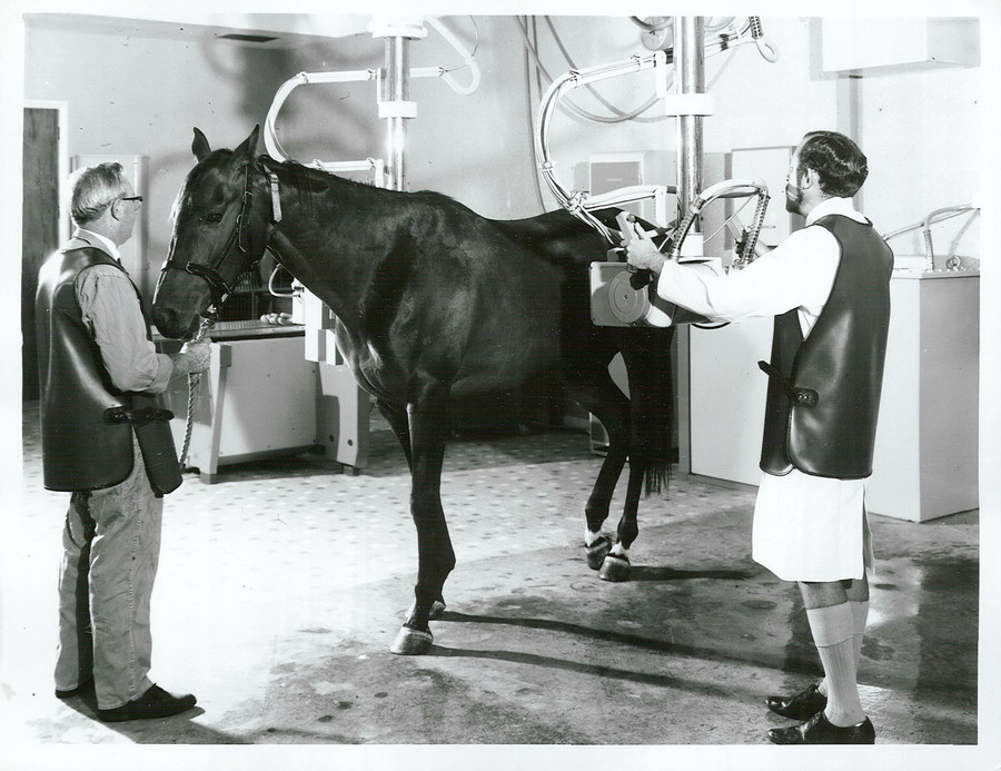 Radiologist examining a horse with X-Ray, 1969   Title