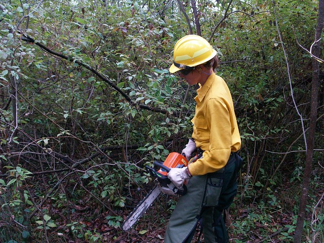 A Forest Service employee cutting brush