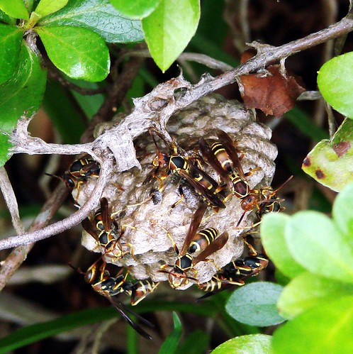 Image Result For Can Wasps Sting