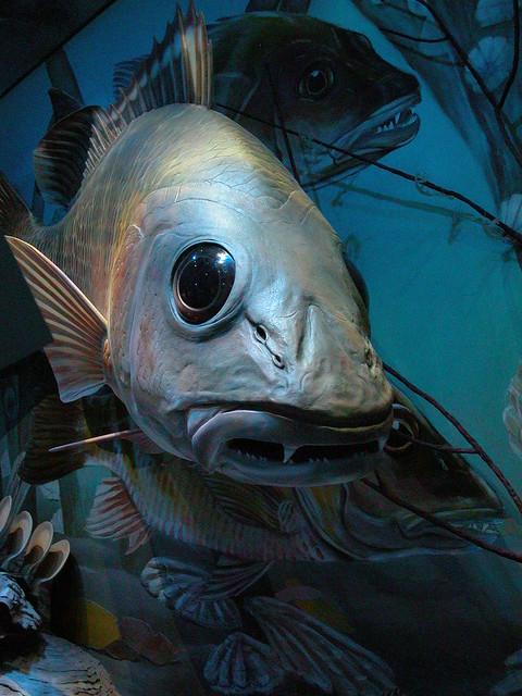 Scary fish head flickr photo sharing for Fish head app