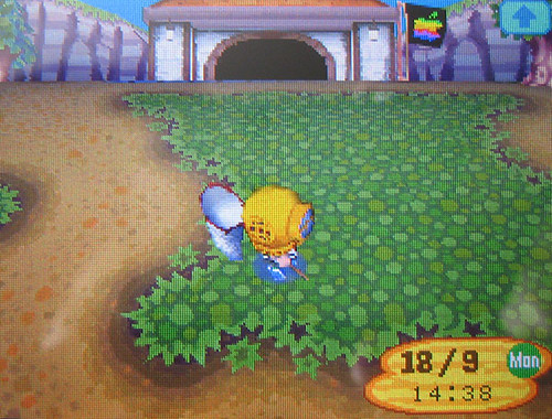 how to get a dog in animal crossing wild world