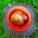 Cone-an the conker-or II