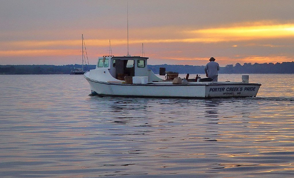 Eastern Shore waterman   Crabbing on the Miles River ...