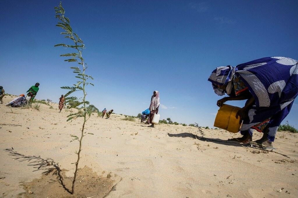 圖片來源:UNDP