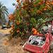 Farm, La Gomera
