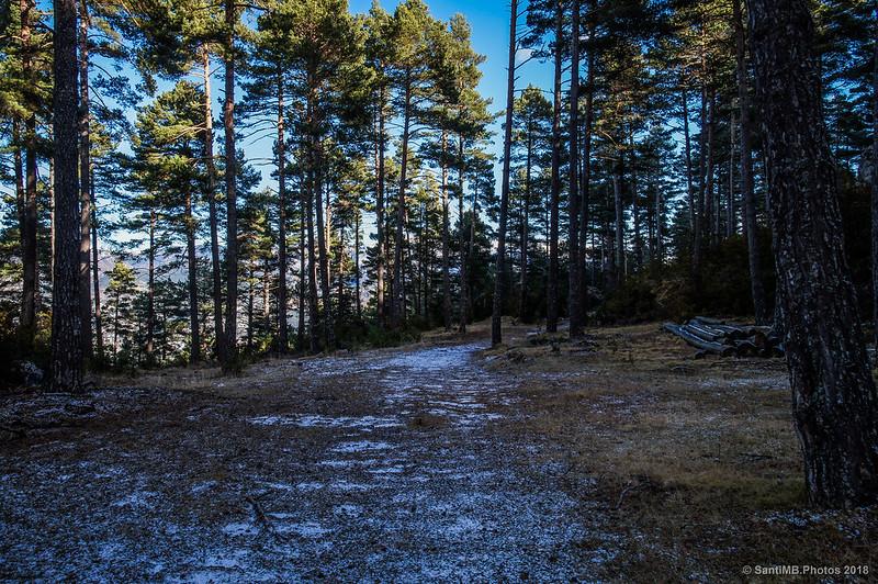 La Baga de d'Espinal en el Bosc de Palomera