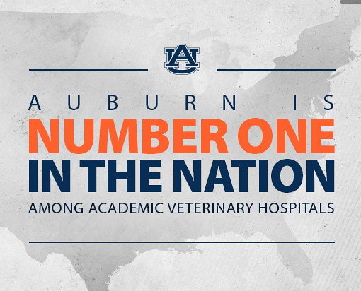 Auburn is number one in the nation among academic veterinary hospitals