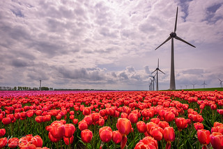 Tulips & Windmills / 02 | by Marc Bezembinder