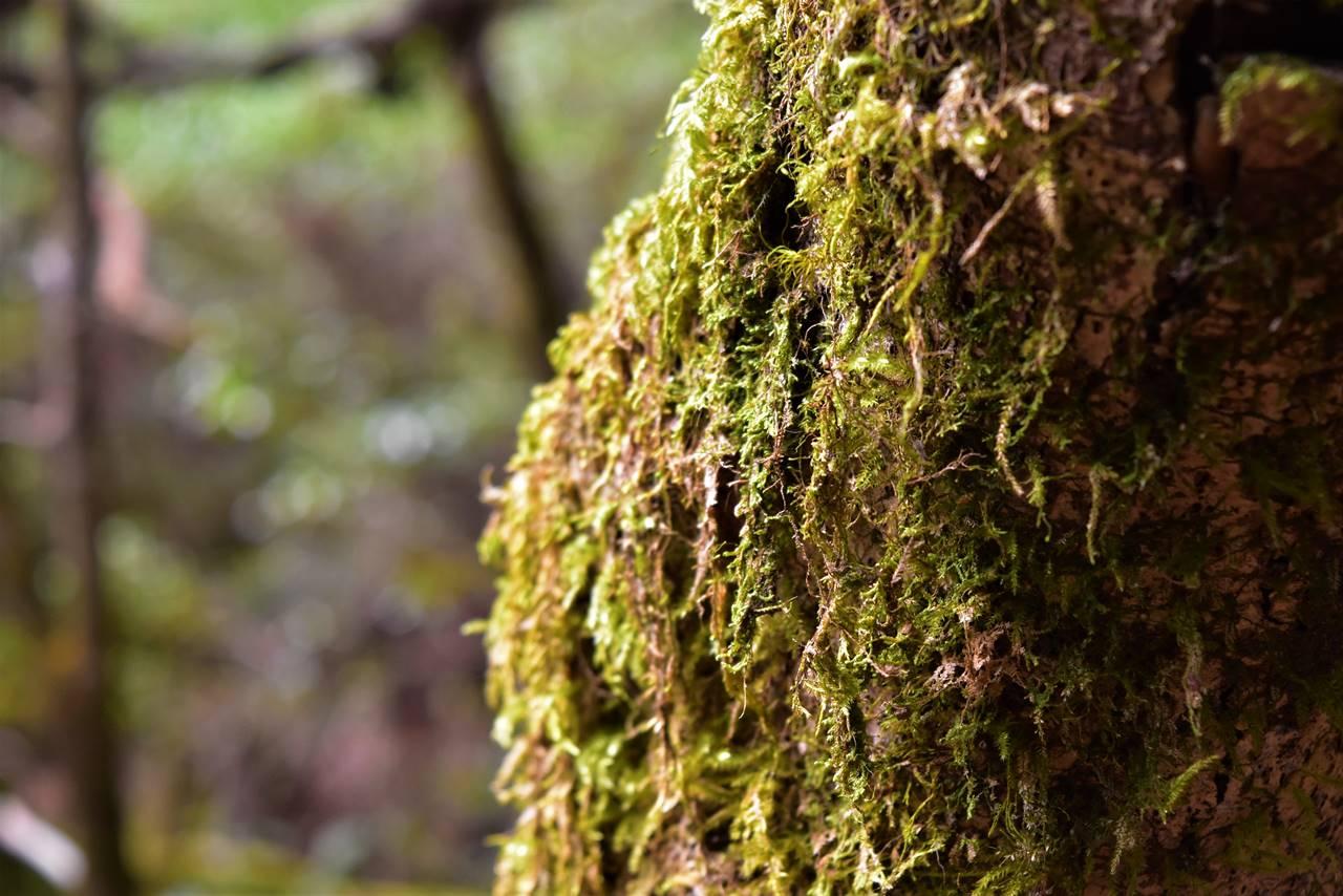 屋久島・苔の森