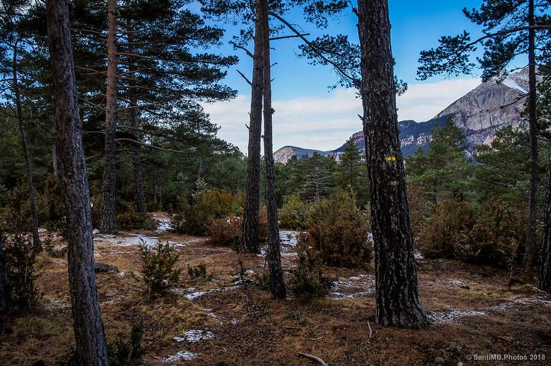 Buscando el sendero del Bosc de Palomera