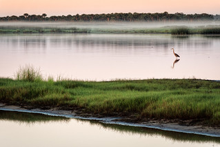 Misty morning marsh | by Ed Rosack