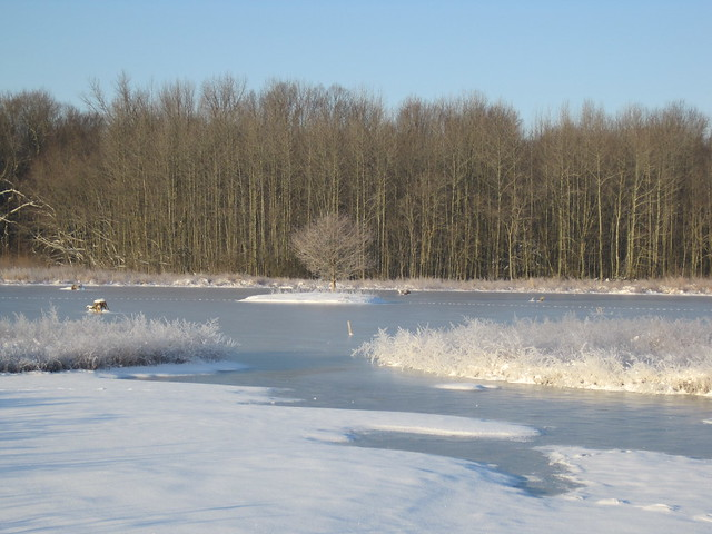The frozen wetland at Viola Farms