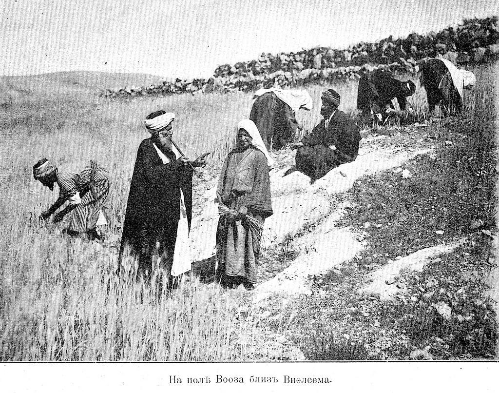 Изображение 93: На поле Вооза близ Вифлеема.