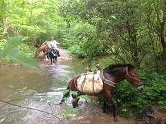 Crossing the Creek 2