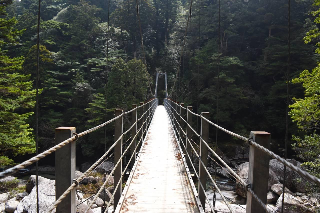 ヤクスギランド・吊り橋