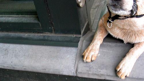Seattle Dog Friendly Parks