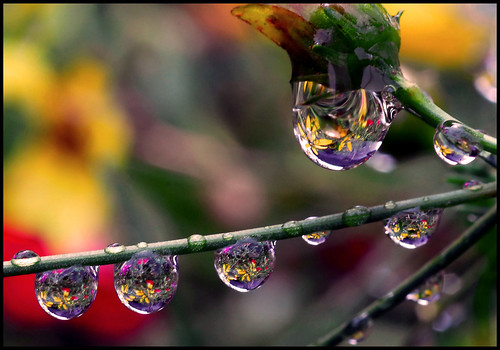 bouquet in a drop | by Steve took it
