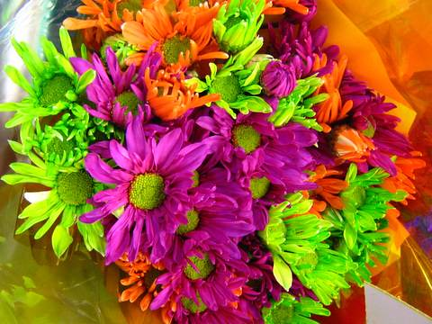 Electric Neon Flowers | So apparently our local Shop And ...
