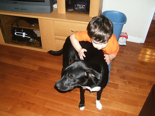Note How Connor Is Hanging All Over The Dog