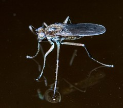 Fly on water | by placbo