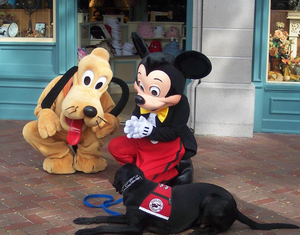 Pluto Rescue Dog