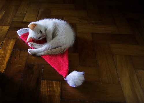 Papai Noel chegou cedo este ano [Santa Claws arrived early this year] | by Jim Skea